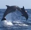 Over onze Oceaan Exclusives